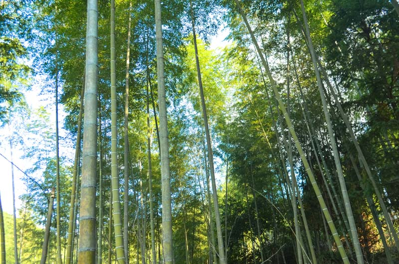 Trends in bamboo products